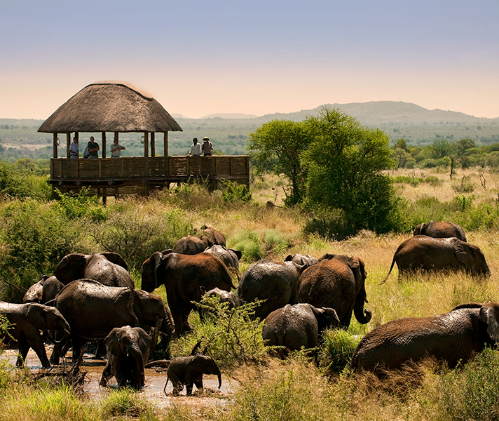 Fantastic Big 5 game viewing at Morukuru Farmhouse - offering comfort & luxury, it is a home away from home.