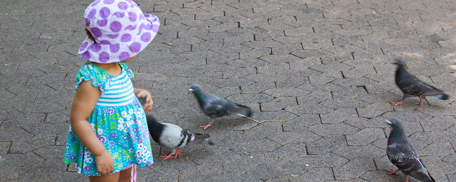 Make friends with the pigeons in the Company's Gardens & look out for the albino squirrel!