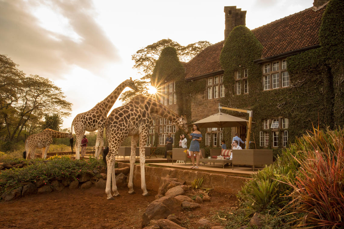 safari-11_giraffe-manor