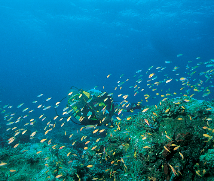 Diving in the Quirimbas is amongst the best in the Indian Ocean.