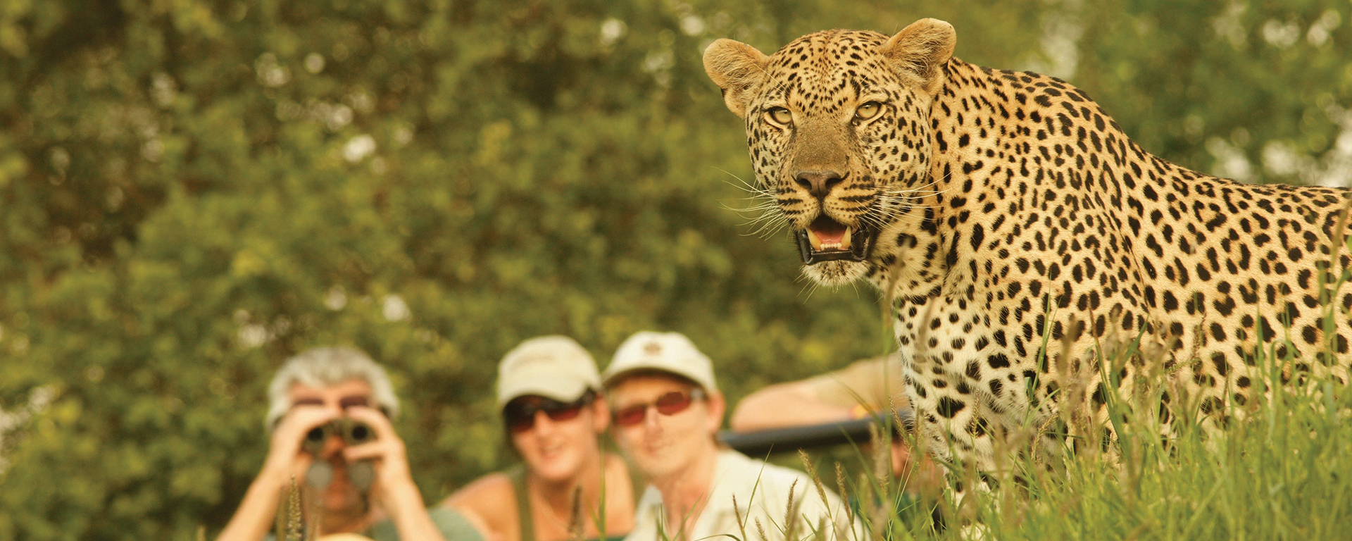Londolozi is prime leopard territory, boasting one of the highest concentrations of these nocturnal cats on the continent.