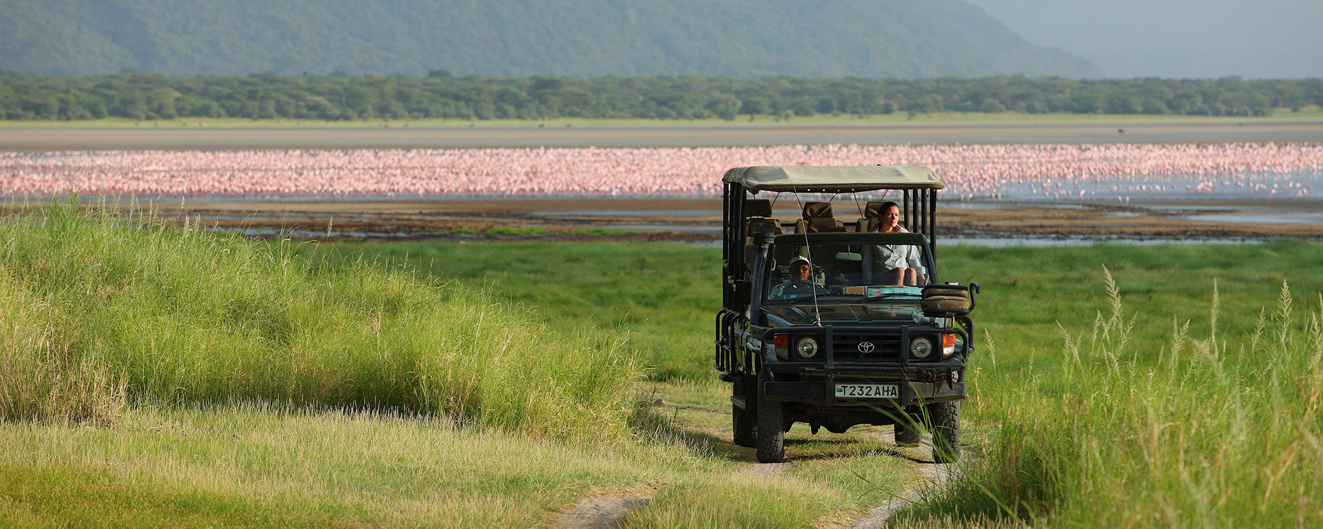 Even non- birders will be enthralled by Lake Manyara's thousands and thousands of flamingos that tinge the water pink with their dropped feathers.