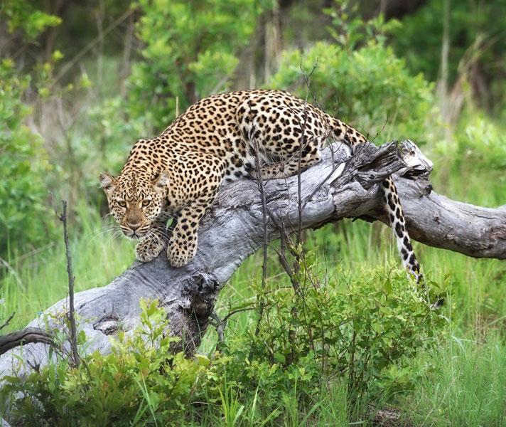 Hwange National Park has a fantastic reputation for predator sightings.