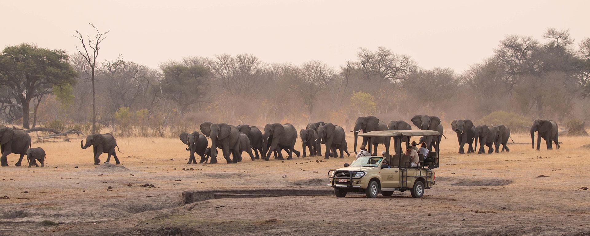 Epic Journeys On African Safari Tours