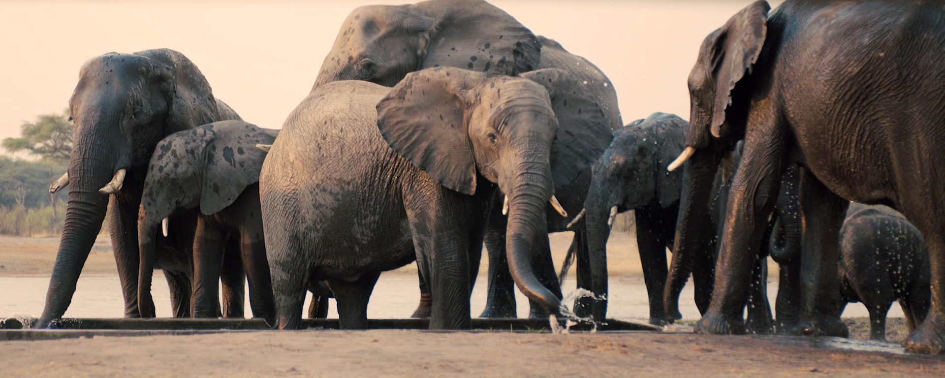 Best African Safari Tours Our Top Picks With Inspiring Photos - 10 best safaris in africa