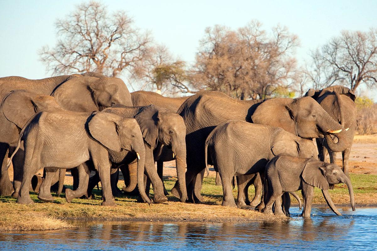 Hwange National Park Elephants, Zimbabwe