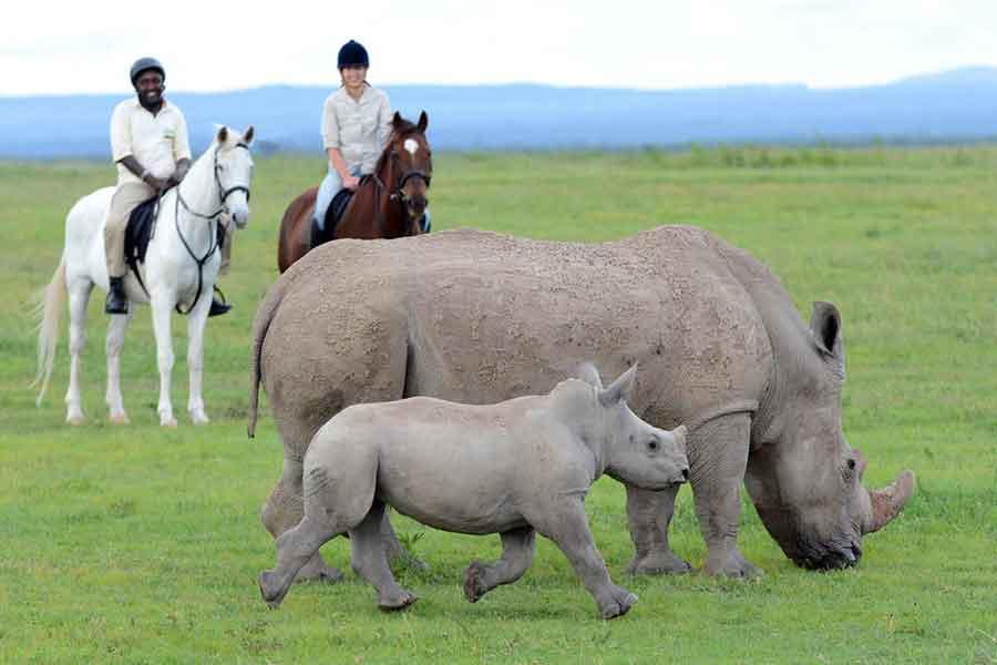 Horseback safari watching a rhino and her baby at Ol Pejeta Conservancy in Kenya