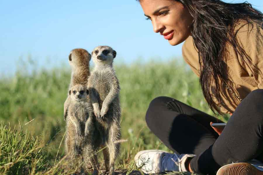 A Go2Africa traveller interacting with meerkats found in Botswana and South Africa