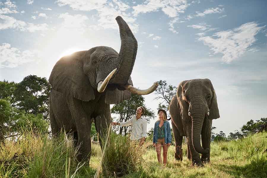 Getting very close to elephants are Baines Camp in Botswana