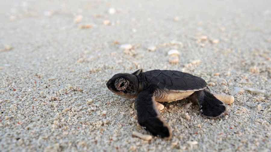 Witness marine turstles nesting & hatching on Africa's Indian Ocean beaches