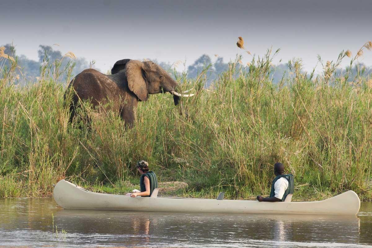 Canoe safari watching an elephant grazing at Baines River Camp in Zambia