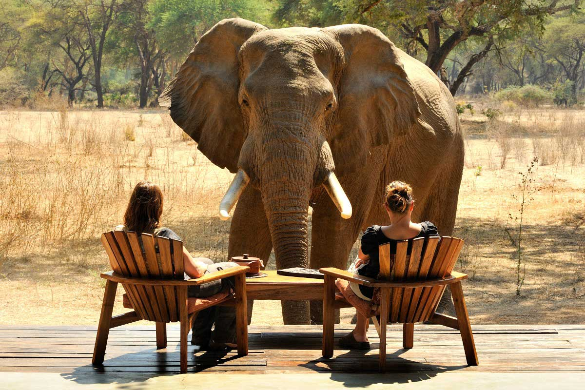 Our Africa Safari Experts sitting on a deck at Old Modoro very close to a curious bull elephant