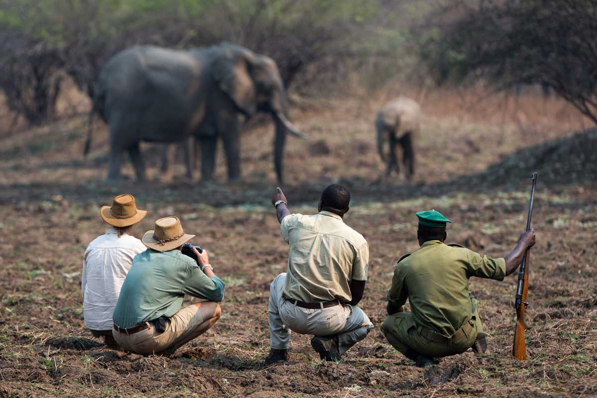 Go2Africa Travellers with 2 guides on a walking safari watching elephants in Zambia