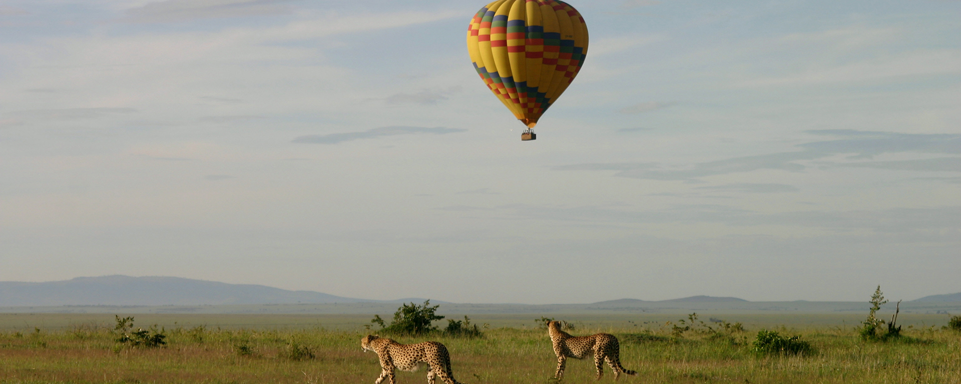 Airborne above the Serengeti or Masai Mara eco-systems in a hot-air balloon.