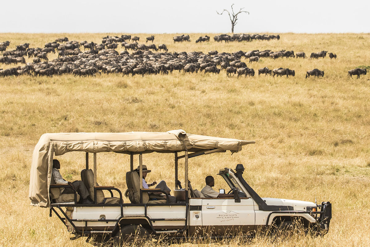 Witness the wildebeest migration on a safari in Tanzania