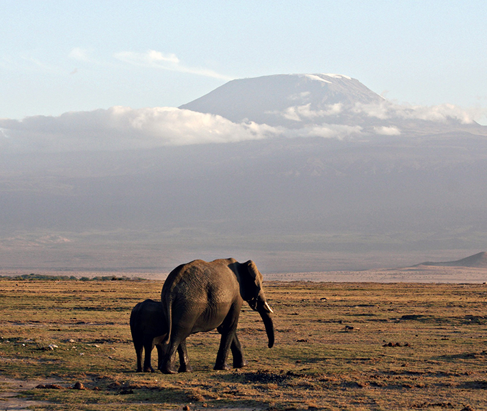 Seeing elephants at Amboseli with Mount Kilimanjaro in the background was such an iconic safari moment!