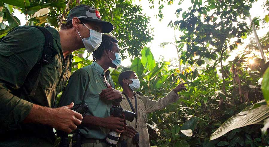 Travellers looking for goriallas while gorilla trekking in the Congo