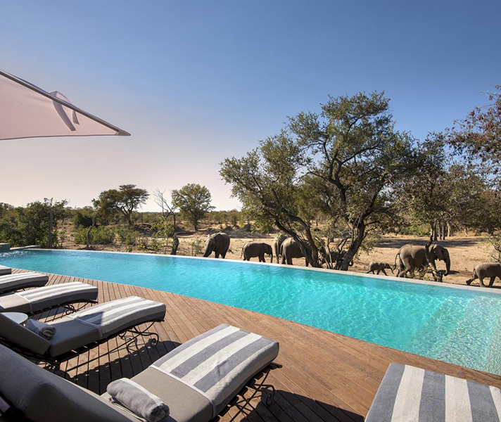 Elephant families are regular visitors to the waterhole, strolling past the swimming pool to quench their thirst.