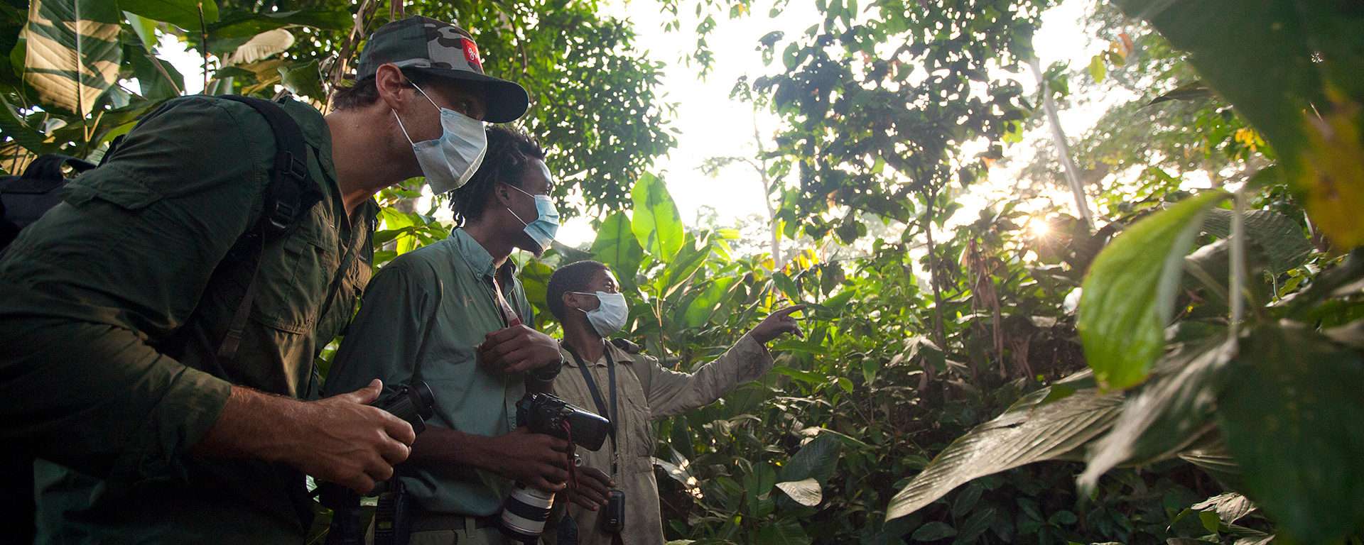 Dress in browns, greens and greys, and wear trousers and long-sleeved shirts. In some areas, your guide will hand out disposable masks as gorillas are susceptible to human diseases.
