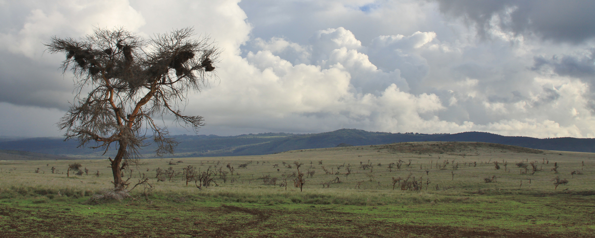A classic late afternoon Green Season landscape in Lewa – Kenya's glorious clouds make for very atmospheric photographs.