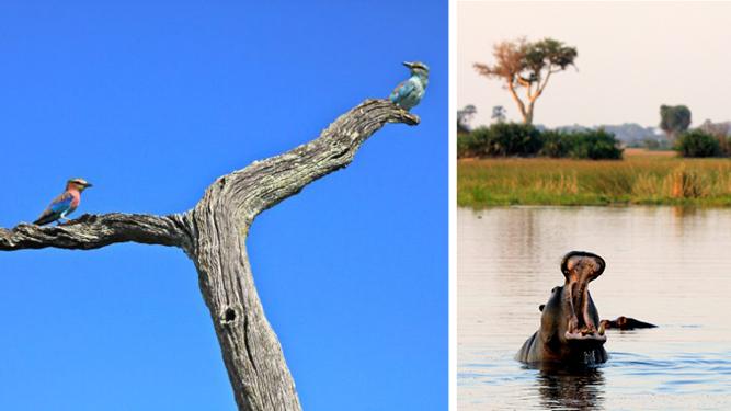 The Okavango From the Inside