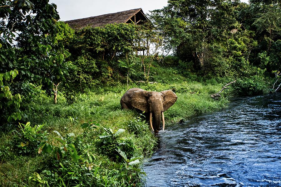 edited-mboko_camp_elephant