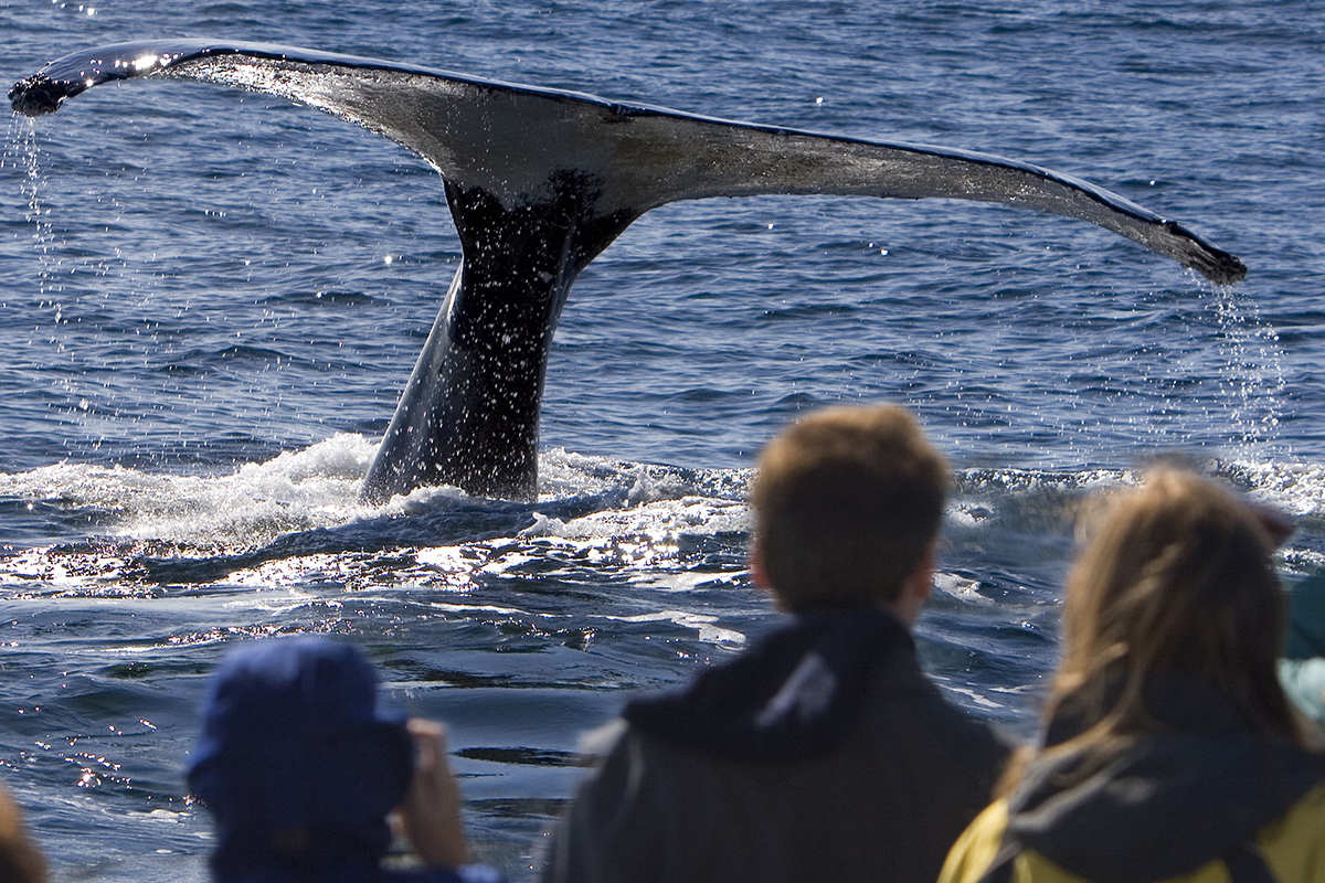 Whale-