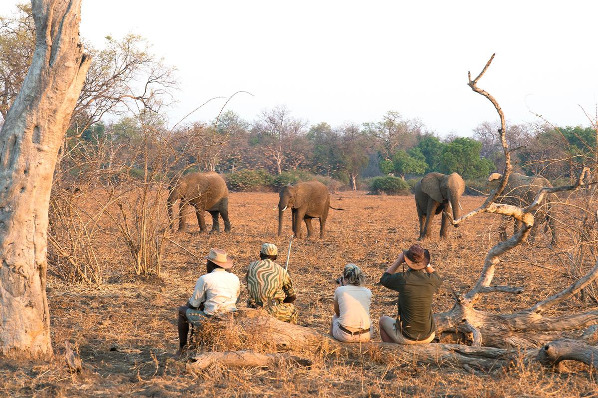 walk-safari