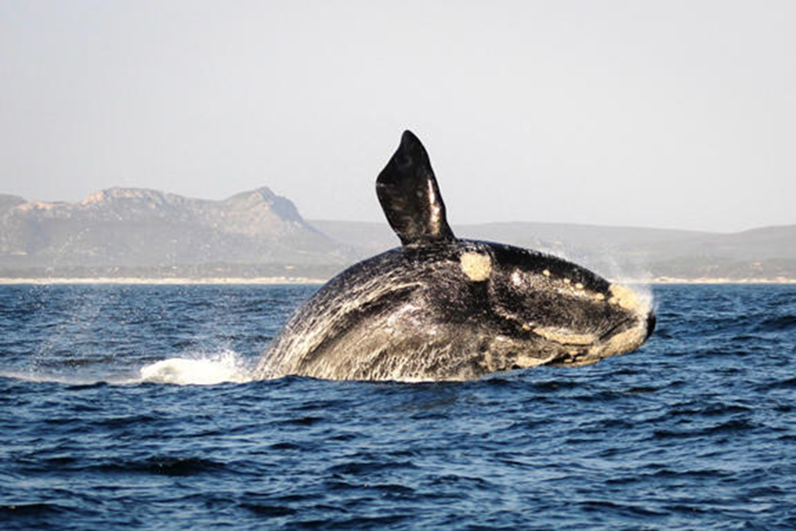 web-grootbos-experience-whale-watching-04