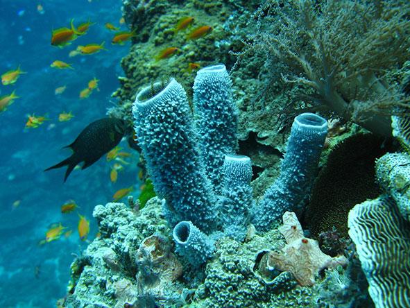 Fish swimming near a reef | Zanzibar Beaches & Holidays | Go2Africa