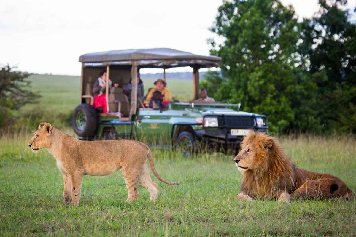 Lion game viewing in Amboseli