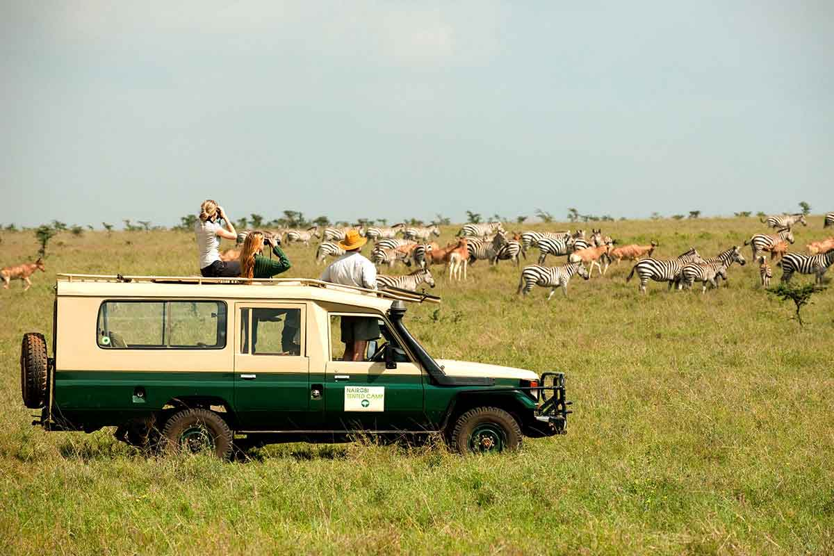 Enjoy easy game viewing in Nairobi National Park