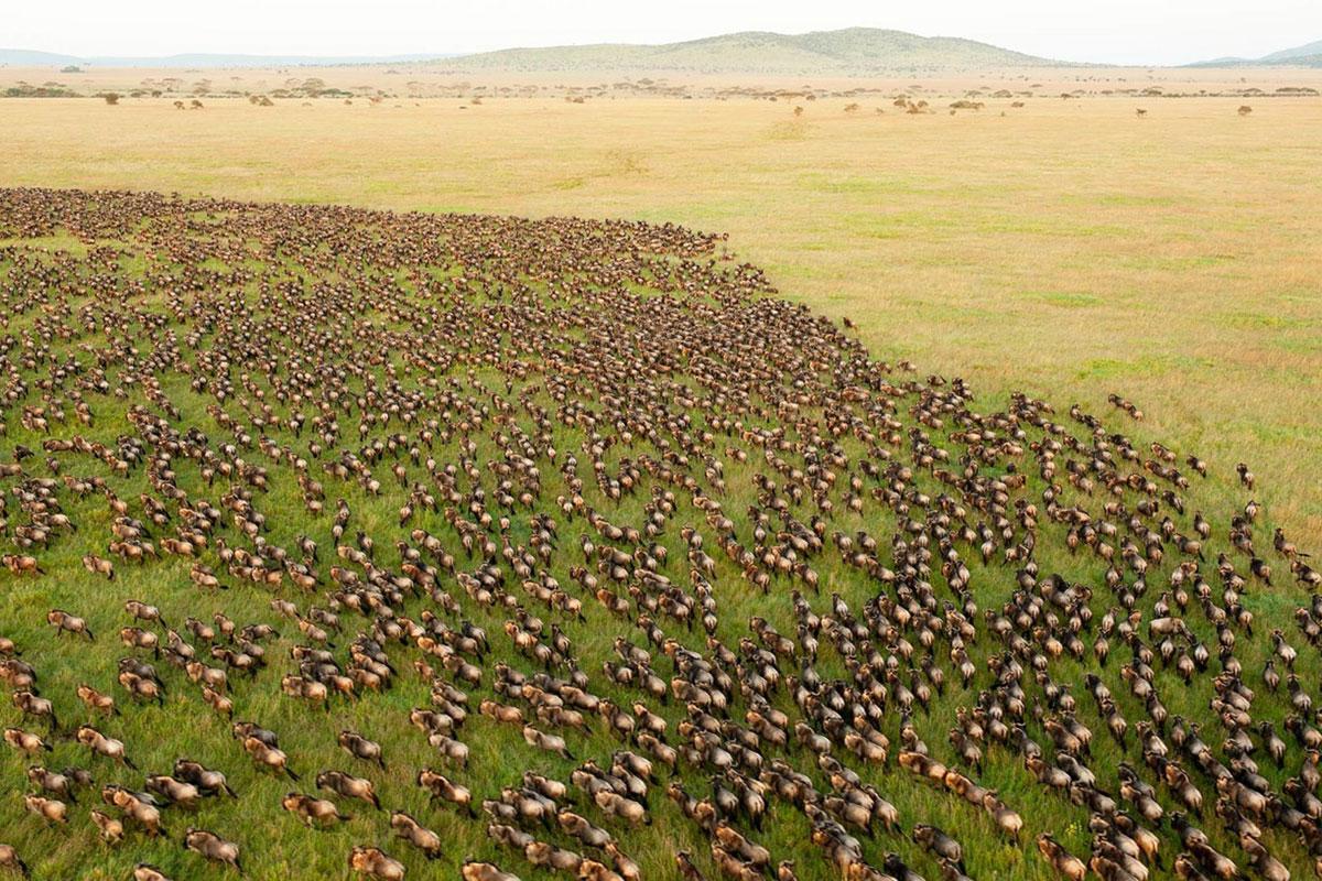 Wildebeest Migration in the Masai Mara, Kenya | Go2Africa