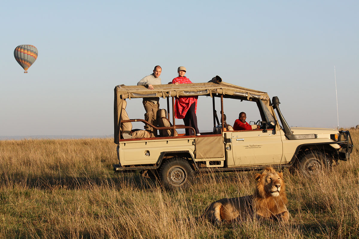 A lion lying close to a safari vehicle & a hot air balloon safari in the distance in the Masai Mara