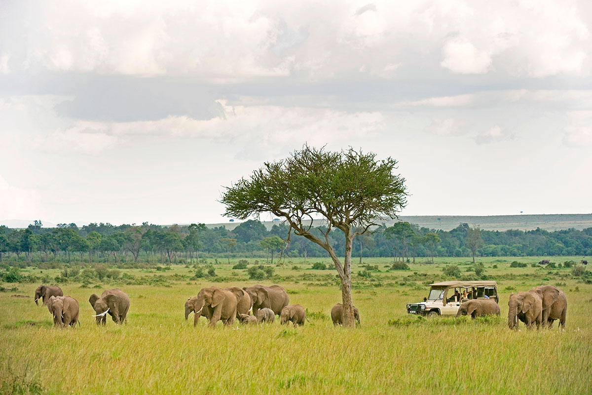 Elephants grazing near Sanctuary Olonana Camp in the Masai Mara, Kenya
