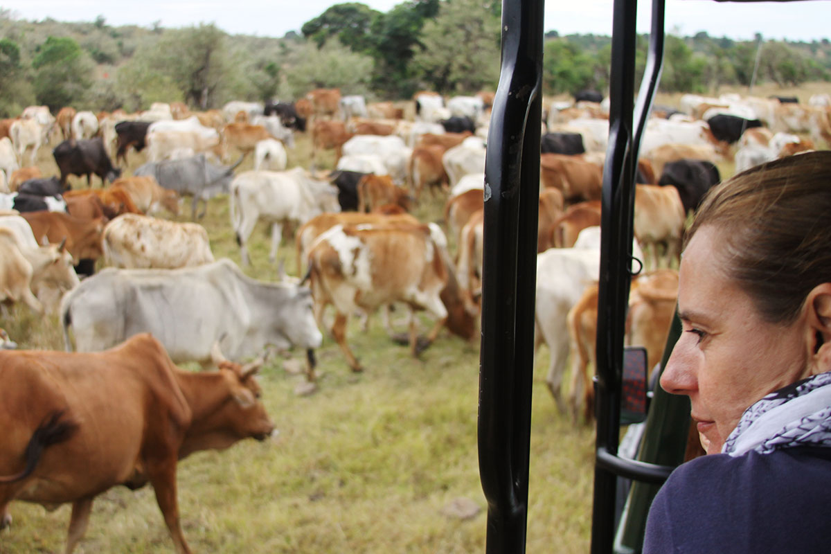 Our Africa Safari Expert, Rikke watching Maasai cattle in the Mara Triangle, Kenya