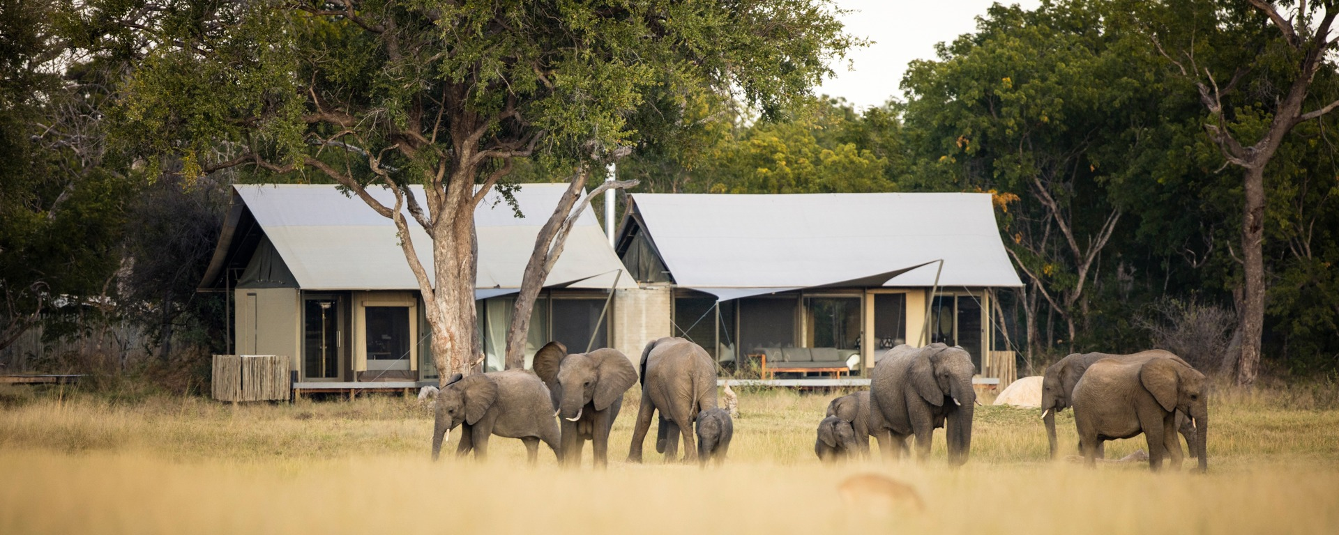 Ultimate Guide to Zimbabwe Safari (Things to Do, Cost & Accommodation)