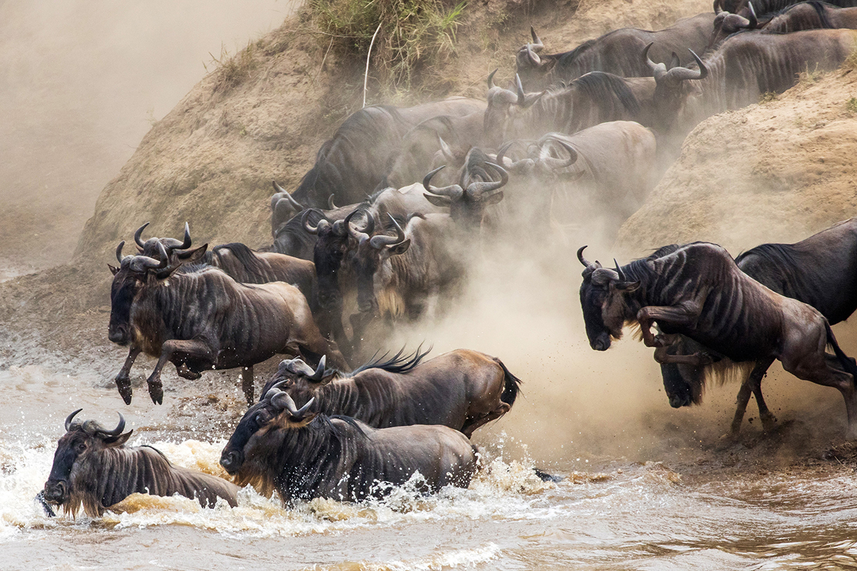 Annual Wildebeest Migration Safari Serengeti