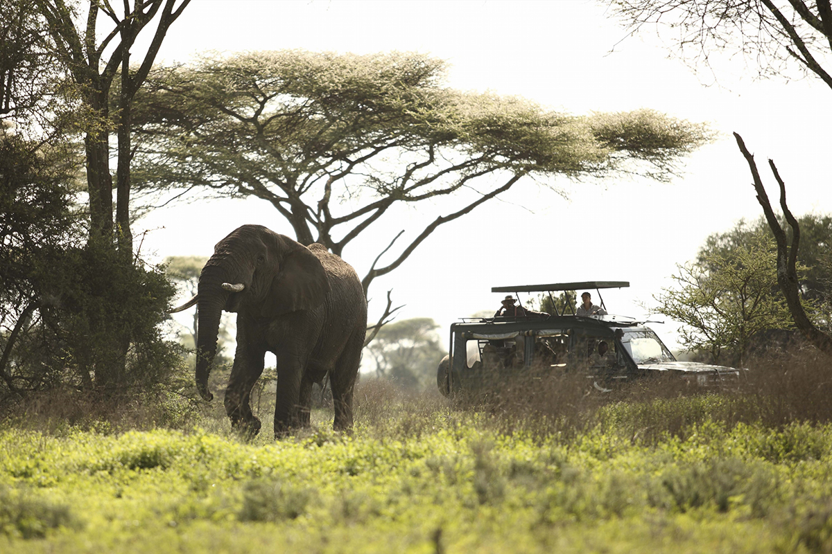 Serengeti Safari for all traveler types