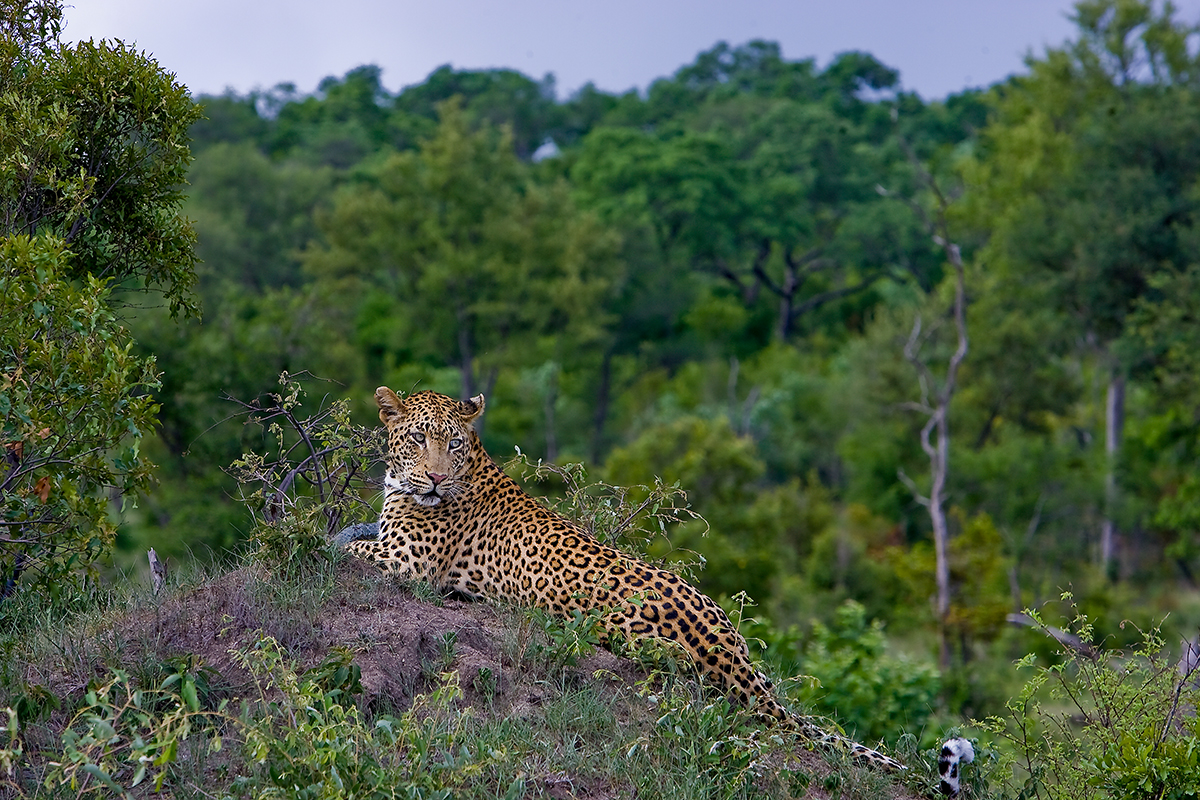 Big 5 Game Viewing Kruger Safaris
