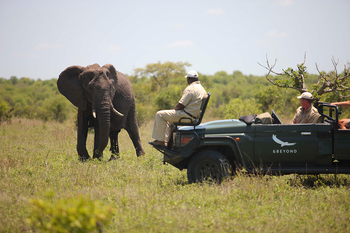 Guided walking safari Kruger elephant sighting