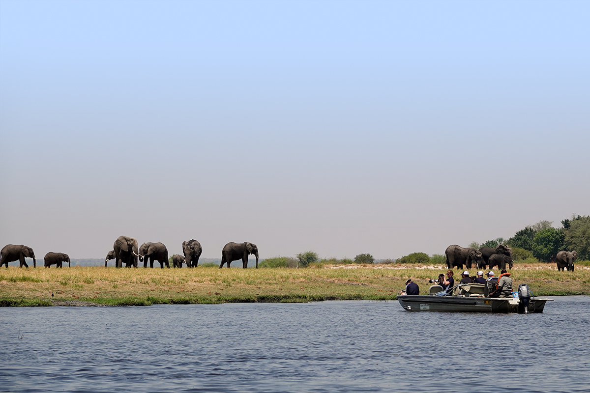 Group on boat safari take pictures of elephants in Chobe National Park | Botswana Safari | Go2Africa