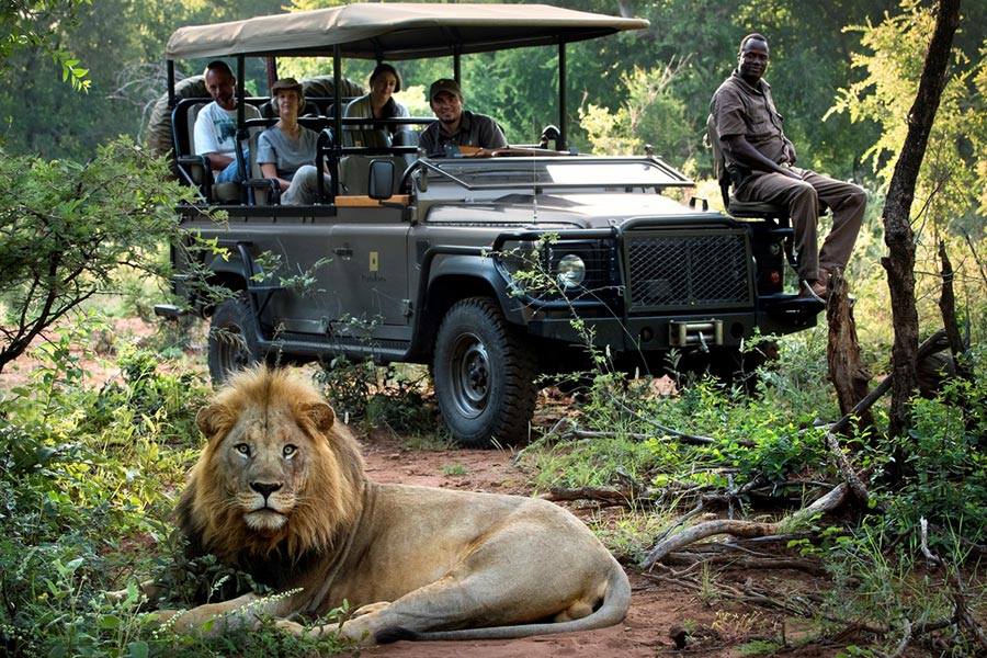 Group on game drive spot lion in Kruger National Park & Reserves | South African Safari | Go2Africa