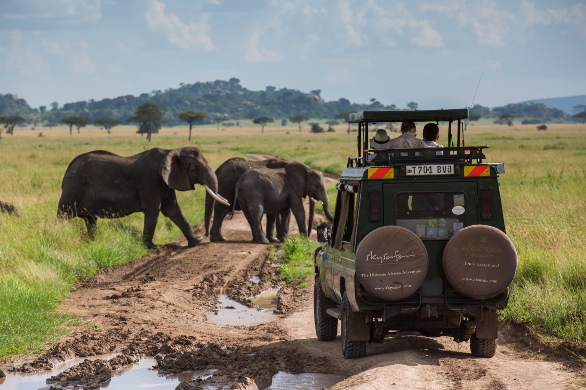 Elephants crossing the road on a game drive in the Serengeti