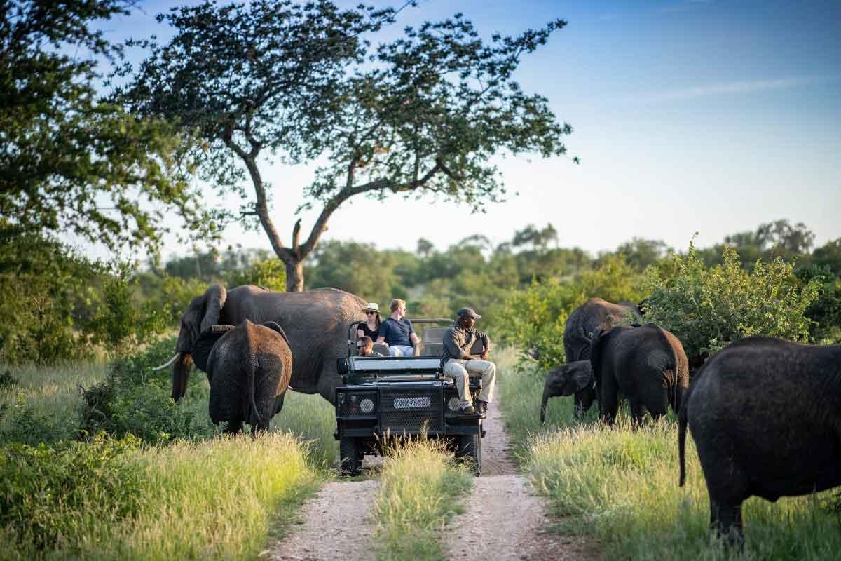 Game drive with Simbavati Safari Lodge.