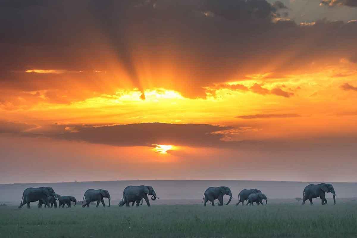Sunset over the Masai Mara.