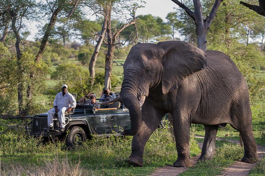 Elephant-Bull-Kruger