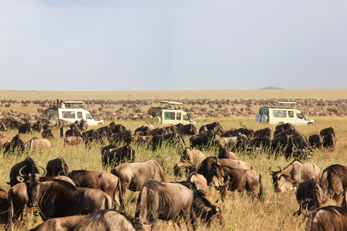 The Great Wildebeest Migration | Tanzania and Kenya Safari | Go2Africa