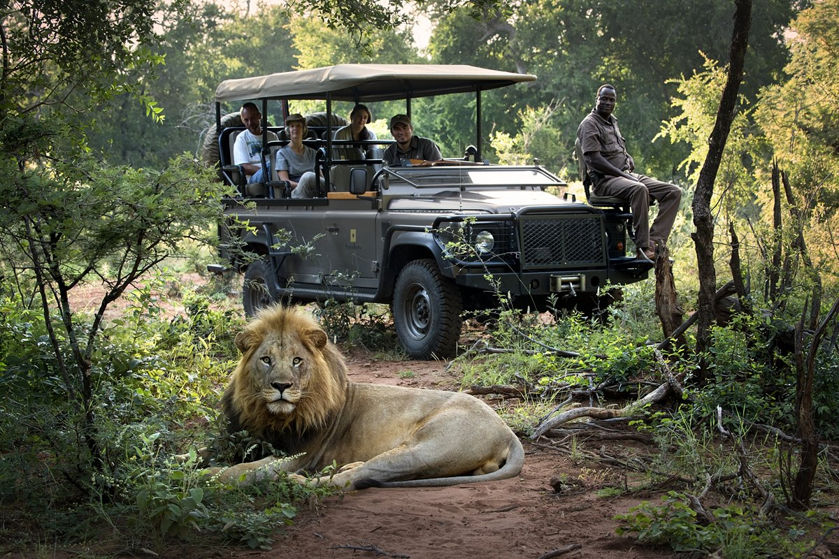 People spotting lion from a safari vehicle in Kruger National Park | South Africa Safari | Go2Africa