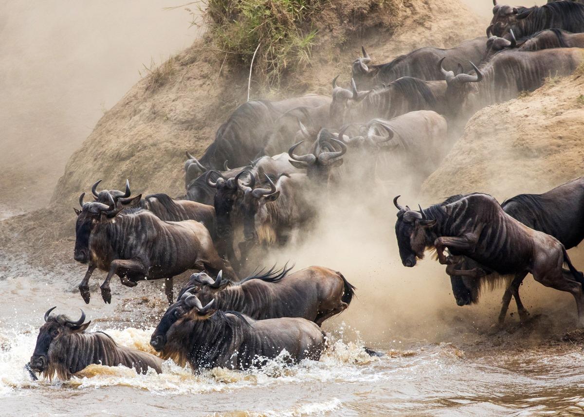 Wildebeest Migration River Crossings | Serengeti & Masai Mara Safari | Go2Africa